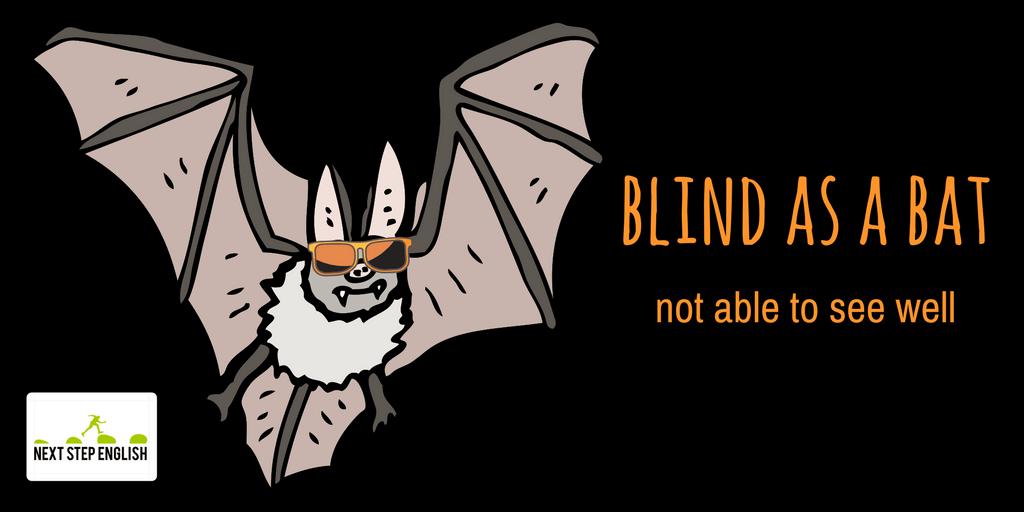 11-blind-as-a-bat-animal-simile-Next-Step-English