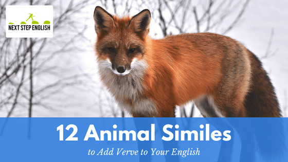 12 Animal Similes to Add Verve to Your English