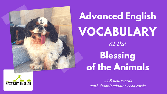 Advanced English Vocabulary at the Blessing of the Animals