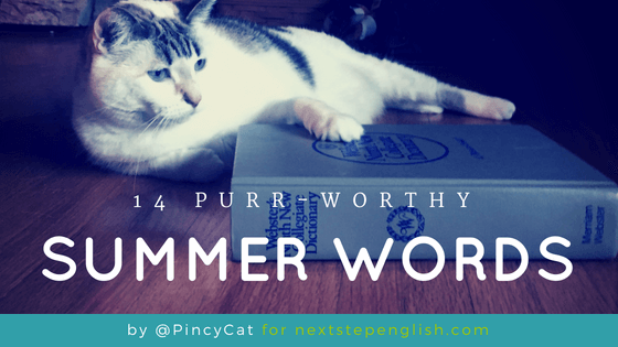 14 Purr-Worthy Summer Words from Pincy Cat