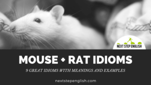 Mouse + Rat Idioms: 9 Great Idioms with Meanings and Examples