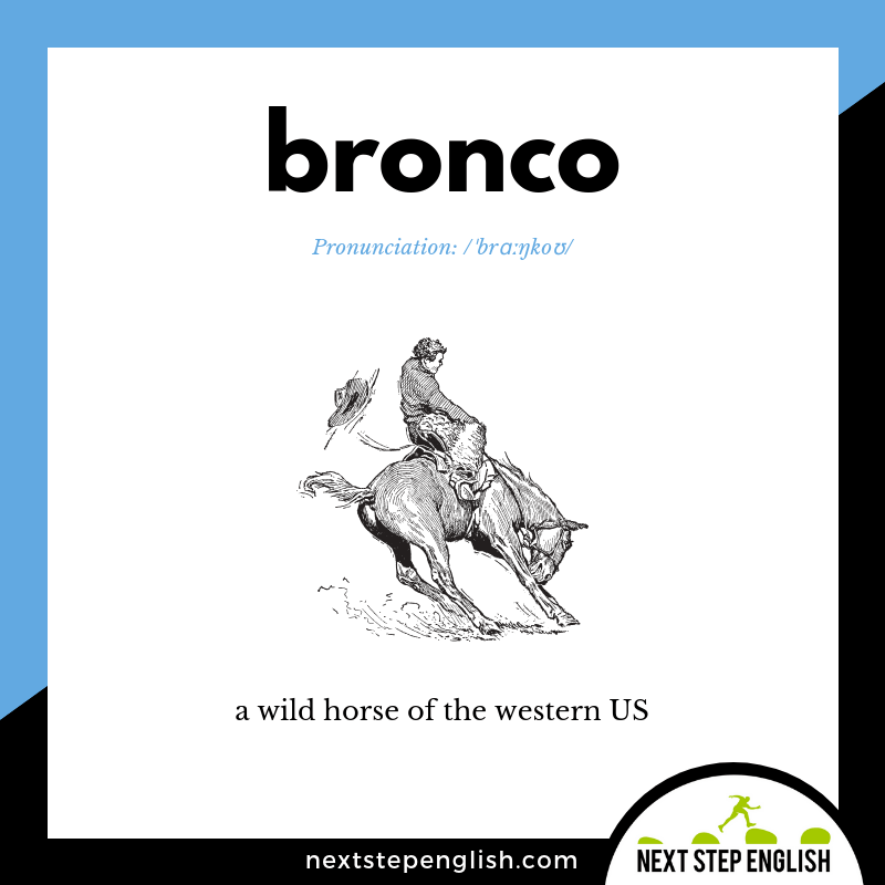 English-vocabulary-define-BRONCO-meaning-Next-Step-English