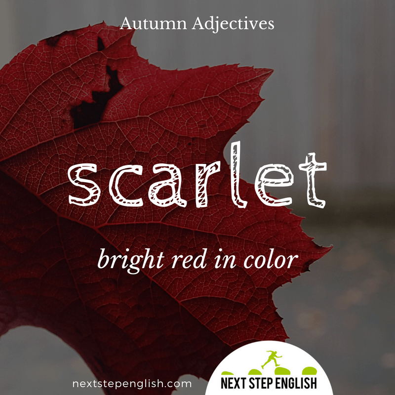 16-fall-words-autumn-adjectives-define-SCARLET-meaning-Next-Step-English