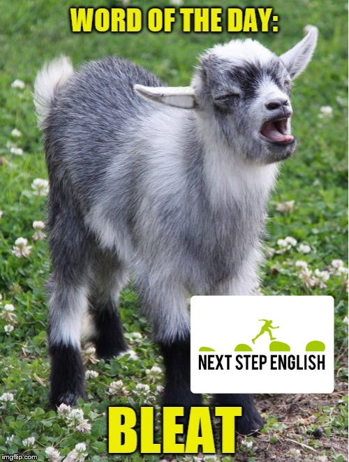 Word of the Day: BLEAT - nextstepenglish.com