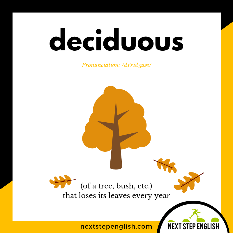 define-DECIDUOUS-meaning-Next-Step-English-visual-vocabulary