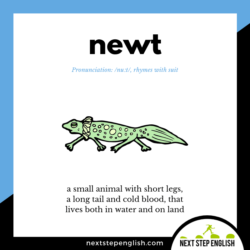 define-NEWT-meaning-Next-Step-English-Dictations