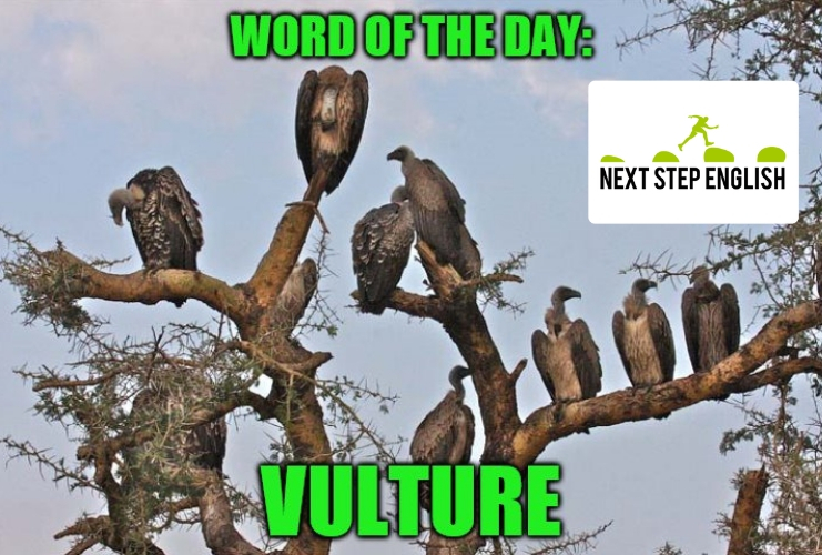 define-VULTURE-meaning-Next-Step-English-word-of-the-day