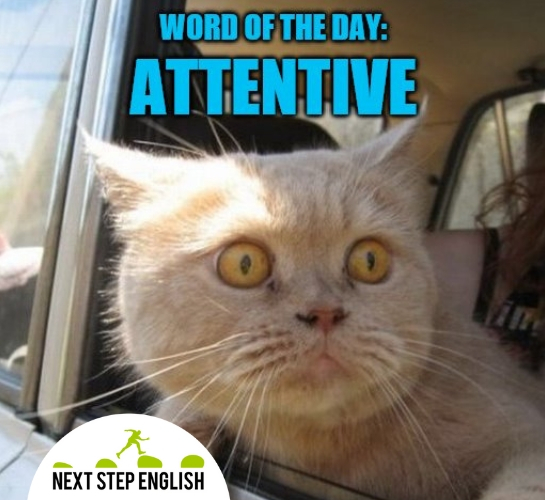 attentive meaning