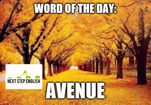 Word of the Day: AVENUE (Next Step English)