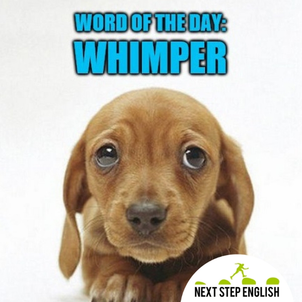Word of the Day: WHIMPER (Next Step English)